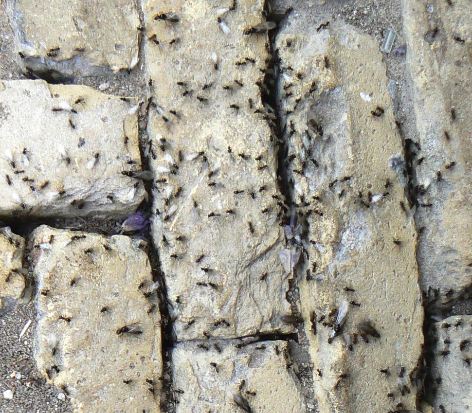 mieren thuis houden